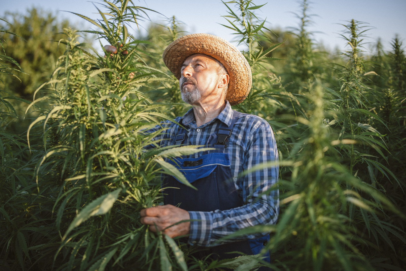 Cannabis: The Growing Visual Landscape in the USA