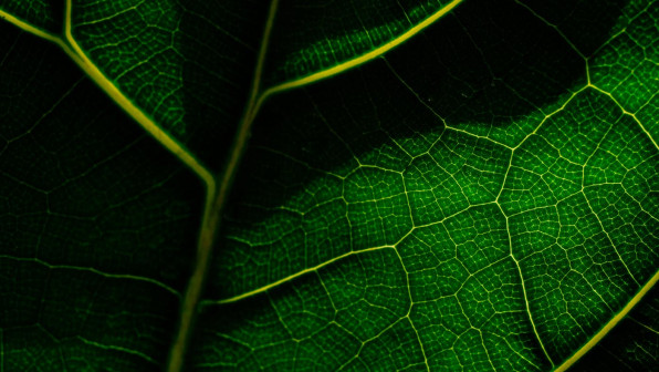 Macro view of a leaf's veins.